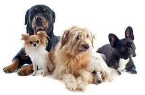 Dog Chewing Paws: 7 Key Reasons You Need to Know