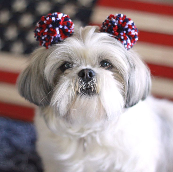 4th of July Dog Hair Bows https://www.etsy.com/listing/386112078/4th-of-july-dog-hair-bows-pom-pom-dog Find me on facebook :  www.facebook.com/FromMyHomespunHeart