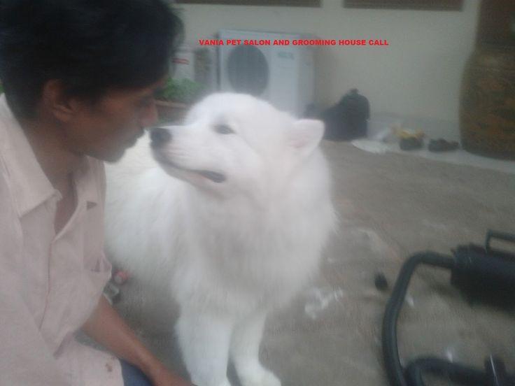 Salon Kucing Anjing Panggilan Ke Rumah | PETSHOP PROFESIONAL HOUSE CALL SALON AND GROOMING