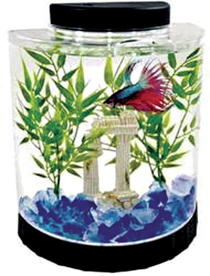 Best 25 round fish tank ideas on pinterest flower vase for Circular fish tank