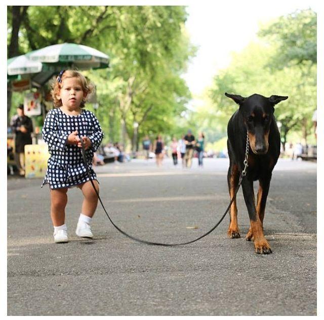 A Child's best friend. #Doberman #Pinscher.