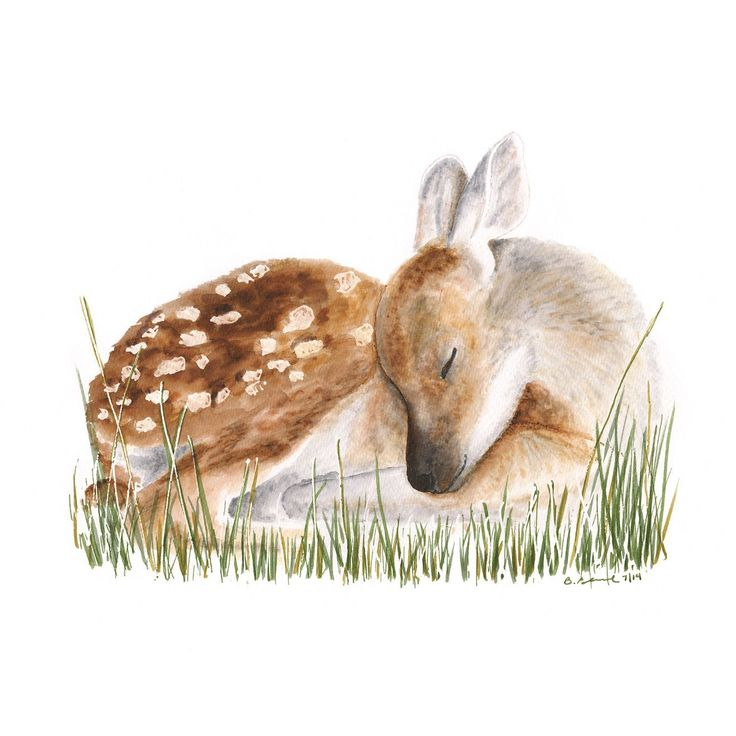 The sleeping baby deer is a giclee print of Brett Blumenthal's original watercolor painting. The woodland nursery art of the baby woodland animal taking a rest is perfect nursery décor for either boy