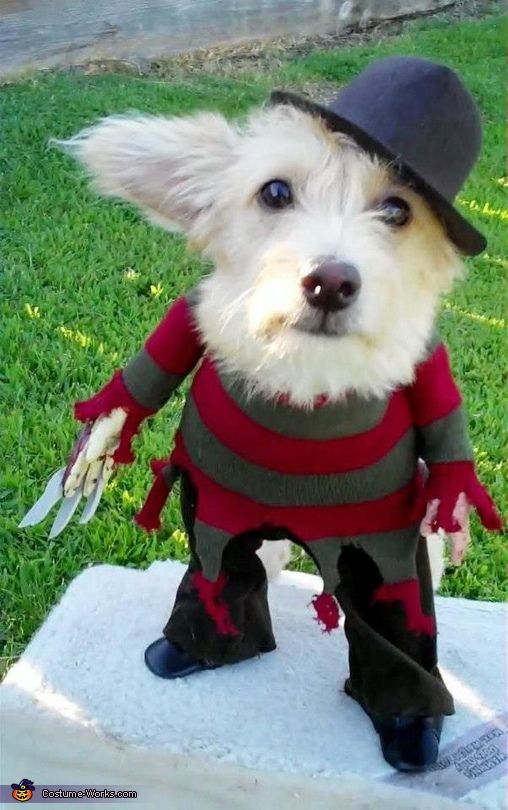 A Nightmare on Elm Street Freddy Krueger Costume for Dogs. Hysterical!