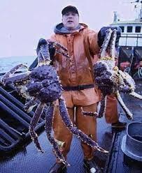 Image result for alaskan king crab