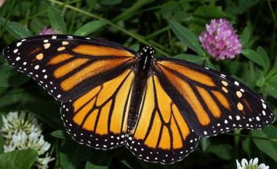 fjärilar - Sök på Google