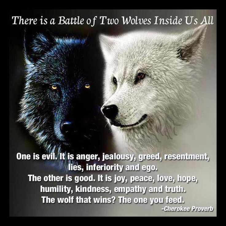 There is a battle of two wolves inside us. One is evil. It is anger, jealousy, greed, resentment, lies, inferiority and ego. The other is good. It is joy, peace, love, hope humility, kindness, empathy and truth. The wolf that wins is the one you feed. —  Native American Proverb, Cherokee