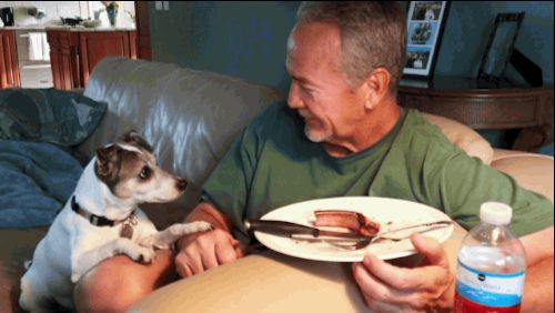 With a dog, you never have to eat alone!