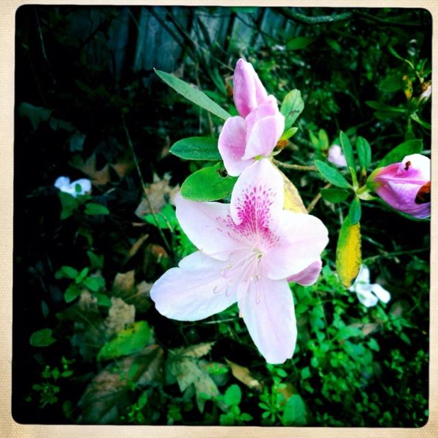 Backyard: Pinwheels, Plants, Backyard