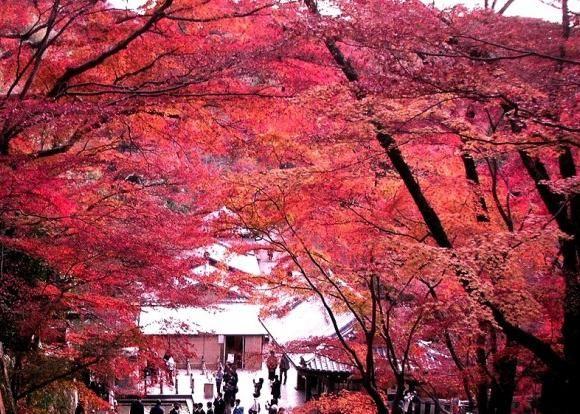 Conheça um pouco do deslumbrante kouyou de Kyoto, festival de momiji. Curiosidades do Japão! » Blog SURIEMU
