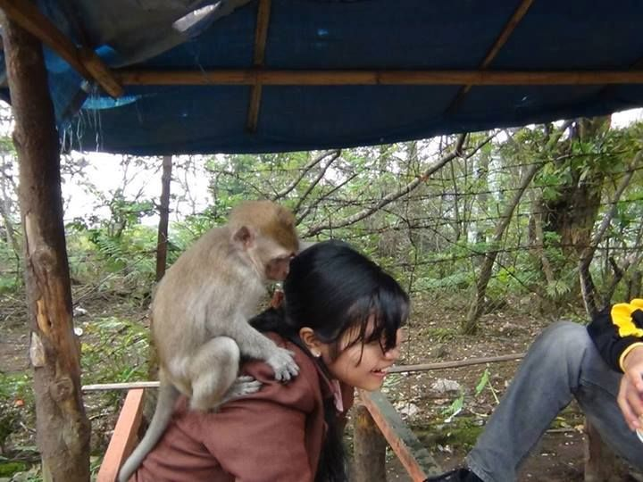 Monkey jumped on my head! By: Jimmy Christianto