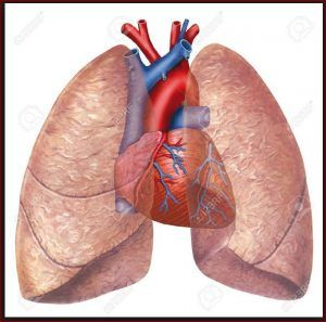 mesothelioma life expectancy stages symptoms