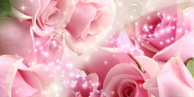 Pink Roses Wallpapers Full HD wallpaper Free Download | Good ...