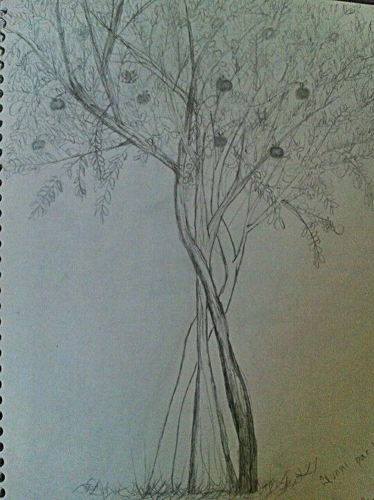 dessin au plomb mon pommier famillier particulier