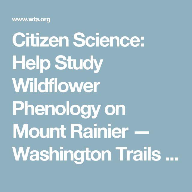 Citizen Science: Help Study Wildflower Phenology on Mount Rainier — Washington Trails Association