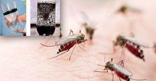 Oto najlepsza pułapka na komary – już nigdy Cię nie pogryzą!
