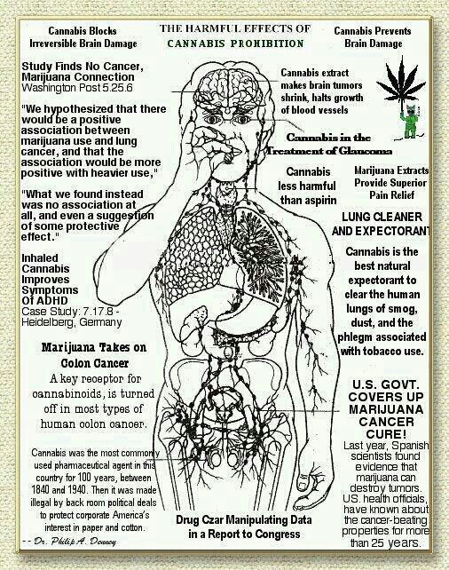 """medicinal marijuana essays Marijuana paper anti-recreational according to dictionarycom, marijuana is """"the dried leaves and female flowers of the hemp plant, used in cigarette form as a narcotic or hallucinogen."""