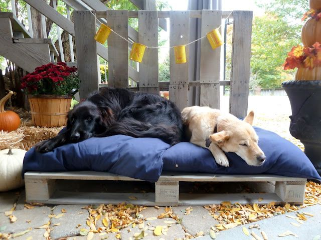 Using a pallet for a raised bed. Dress this idea up and give the dogs a place to hang out on the deck while we swim!