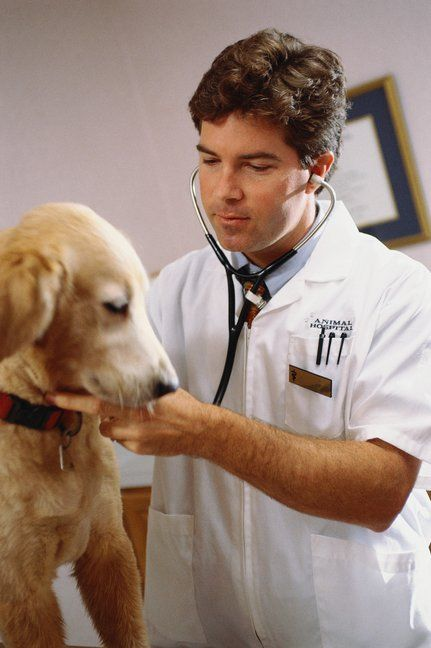 10 Year Goals: College & Career- Earn the chance to intern with a renowned veterinarian at his/her own private practice