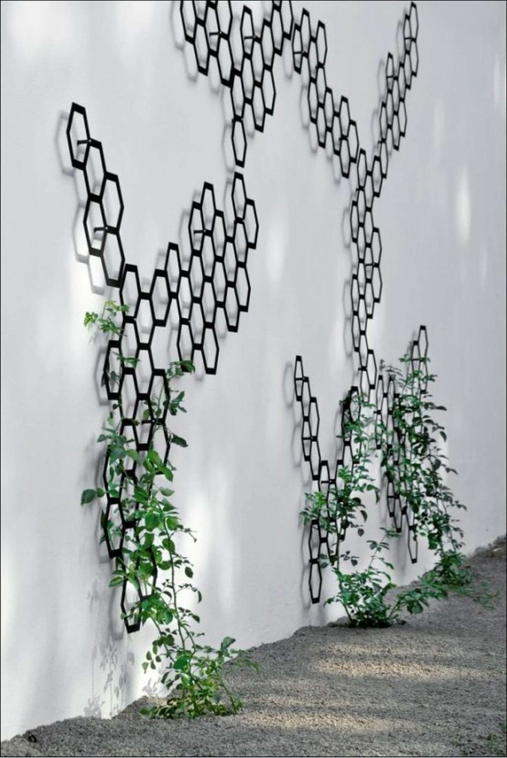 10 best wire trellis images on pinterest trellis design for Wall trellis ideas