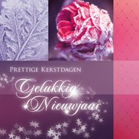 Kerstkaart 'Roze besneeuwde roos'  http://kerstkaarten.cardsandcards.nl/welkom/