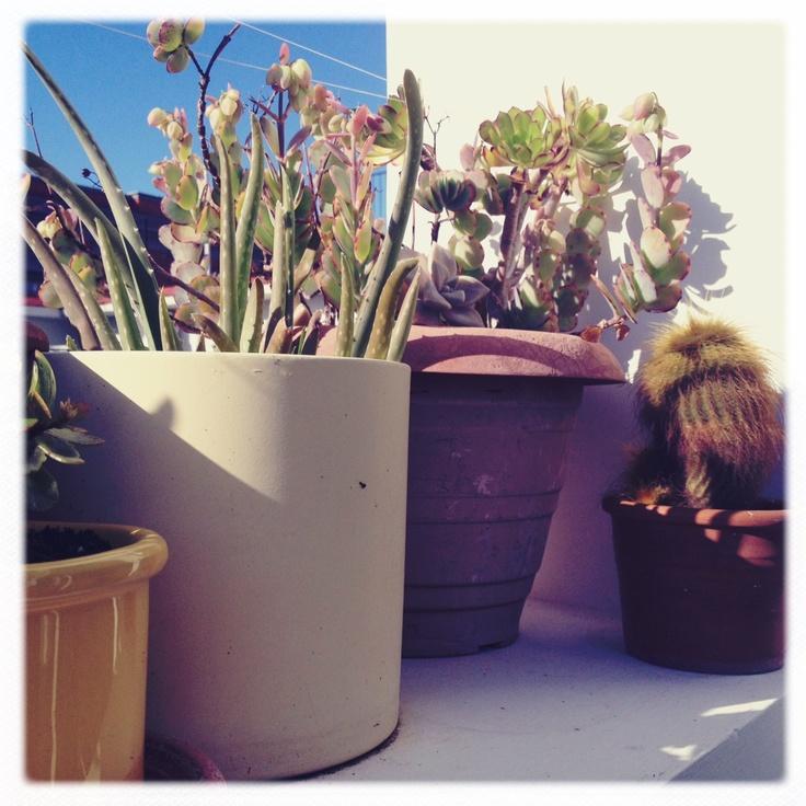piante grasse sul terrazzo dei miei