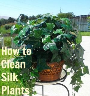 Easy tip for cleaning dusty silk plants with a solution of vinegar and water.