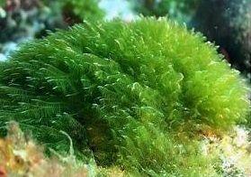Produkty Algi Chamot, Czym są algi? Wpływ alg na skórę, http://akademiaurody.o12.pl/