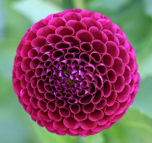 This dahlia flower has patterns of repetitive circles to form another circle. The negative space  would  make an interesting model.