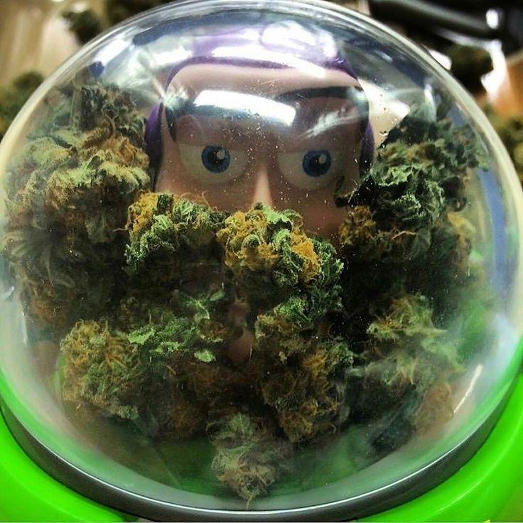 Lyric ganja farmer lyrics : 32 best Weed:) images on Pinterest | Cannabis, Memes de marihuana ...