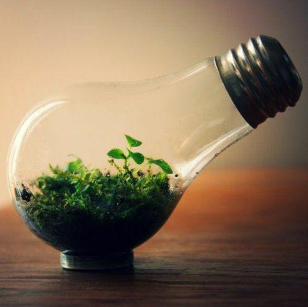 Glühbirnen DIY Deko naturhaft pflanzen Glühbirnen Pinterest - pflanzen für wohnzimmer