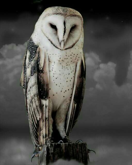 Barn owl - when I look at this picture, I think that's what magic must look like.