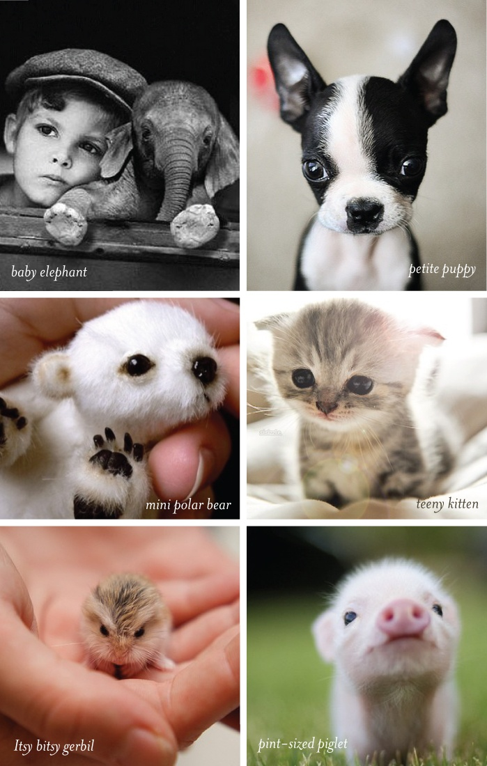 Petite animals are the CUTEST!