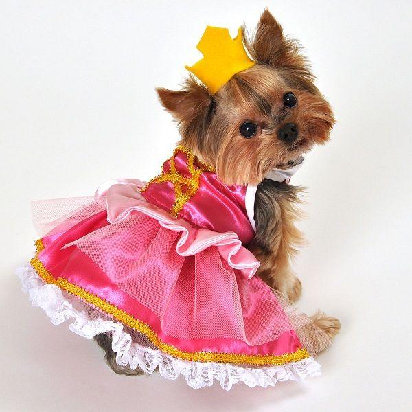 24 besten Dog Halloween Costumes Bilder auf Pinterest | Fantasy ...