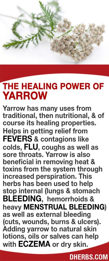 Yarrow has many uses. Helps in getting relief from fevers & contagions like colds, flu, coughs as well as sore throats. Yarrow is also beneficial in removing heat & toxins from the system through increased perspiration. Help stop internal (lungs & stomach bleeding,  hemorrhoids & heavy menstrual bleeding) as well as external bleeding (cuts, wounds, burns & ulcers). Adding yarrow to natural skin lotions, oils or salves can help with eczema or dry skin. #dherbs #healthtips
