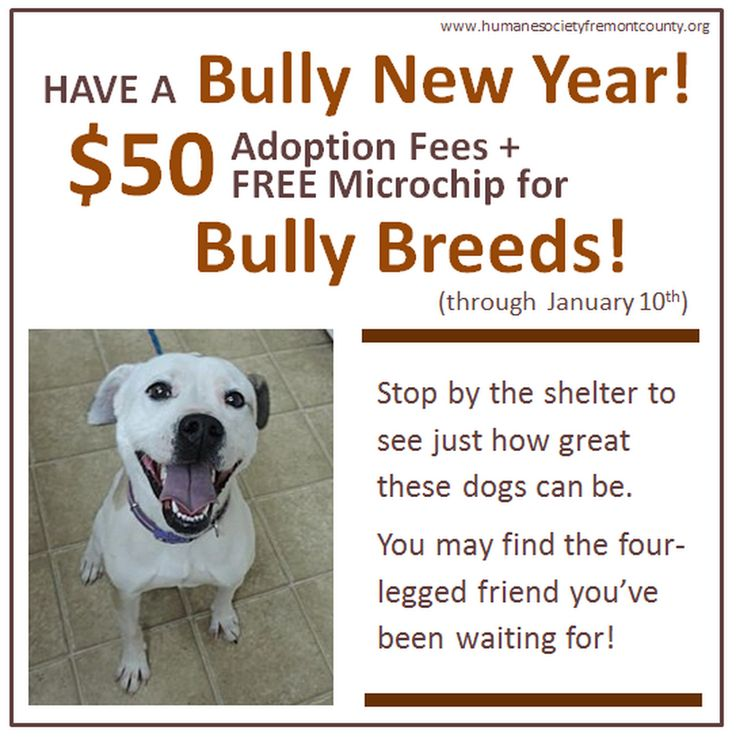 """It's going to be a """"Bully New Year"""" at the Humane Society of Fremont County! Starting TODAY (New Years Day), adoption fees for Bully dogs over 1 year of age, are only $50.00. This also includes a FREE microchip (a $15 value). Hurry on down and meet your new best friend. This promotion ends Saturday January 10th. *** Follow us on Facebook for more adoption specials and news! www.Facebook.com/HumaneSocietyFremontCounty"""