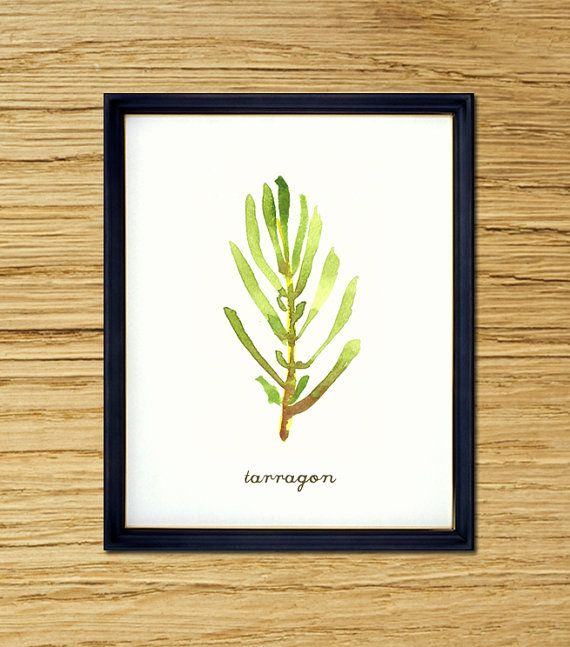Tarragon watercolor painting Botanical painting Herbs by colorZen, $20.00