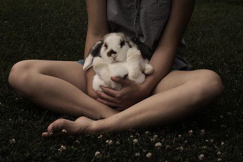 .: Photos, Animals, Bunny, Rabbits, Pet, Creatures, Adorable, Things, Bunnies