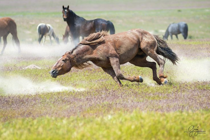 17 Best images about Mustang horse on Pinterest | Black ...