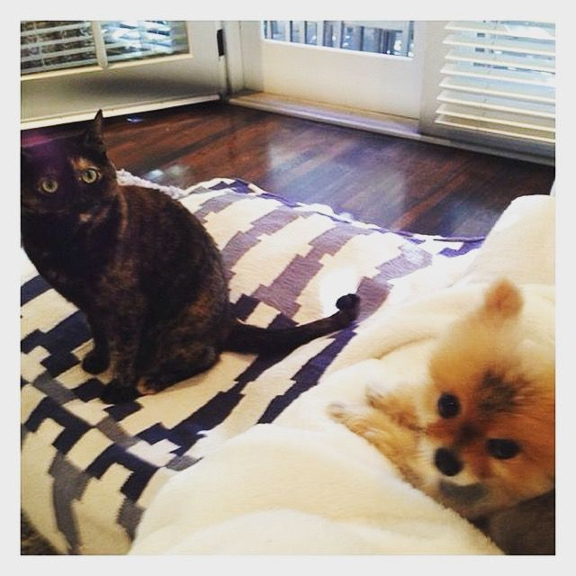 Cats name Sheila and Dogs name Brando #adorableanimals #animallover #animals