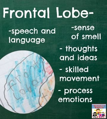 The job of the frontal lobe, check out the blog post for the other parts of the brain