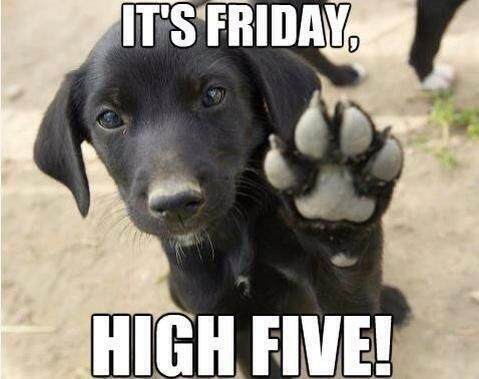 High Five Friday Friday Friday Memes Friday Images Funny Friday Memes Its Friday Quotes Friday Humor Friday Dog