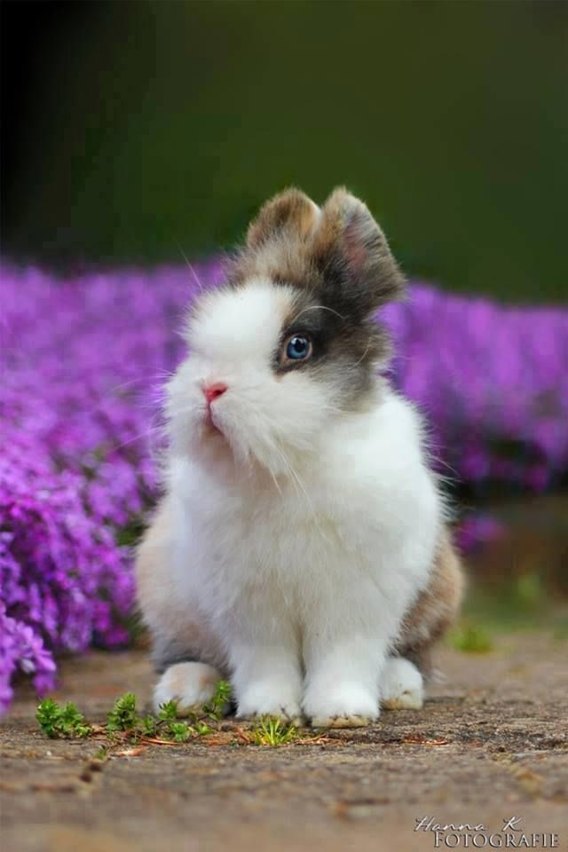 Such a pretty bunny! Look at those eyes!