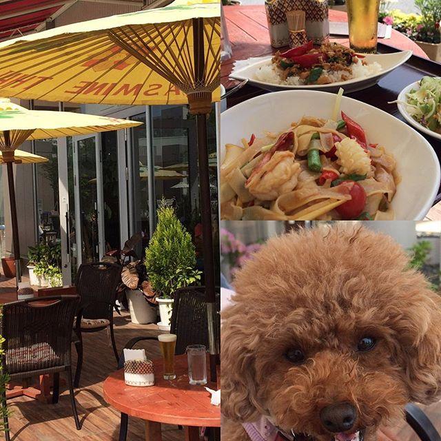 今日は、ピーチと一緒にタイ料理 テラスで丁度良かったのに、辛さで汗が💦 でも、ビールが美味しい🍺  トイプードル#ショッピング #ランチ #タイニー #愛犬 #リード#愛犬#散歩#タイ料理#辛い#可愛い#小型犬 #レッド#