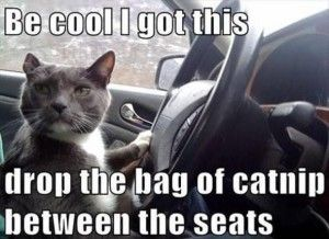 Funny Cat Meme Pictures : Funny cat pics some funny cat memes the kittyton post