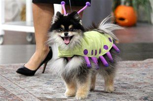 Izzy is a cute caterpillar #halloweencostume