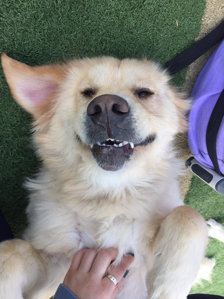Yay! #BellyRubs!!  #DogsOfTwitter #DogLover #DogBoarding #Dogs #DogCare #Fun #DogSitting #Edmond