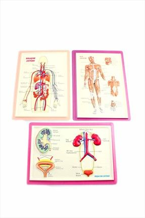 Kadın Learning Toys Dolaşım-boşaltım-kas Sistemi Kabartma Seti    Dolaşım-Boşaltım-Kas Sistemi Kabartma Seti Learning Toys Kadın                        http://www.1001stil.com/urun/3826336/learning-toys-dolasim-bosaltim-kas-sistemi-kabartma-seti.html?utm_campaign=Trendyol&utm_source=pinterest
