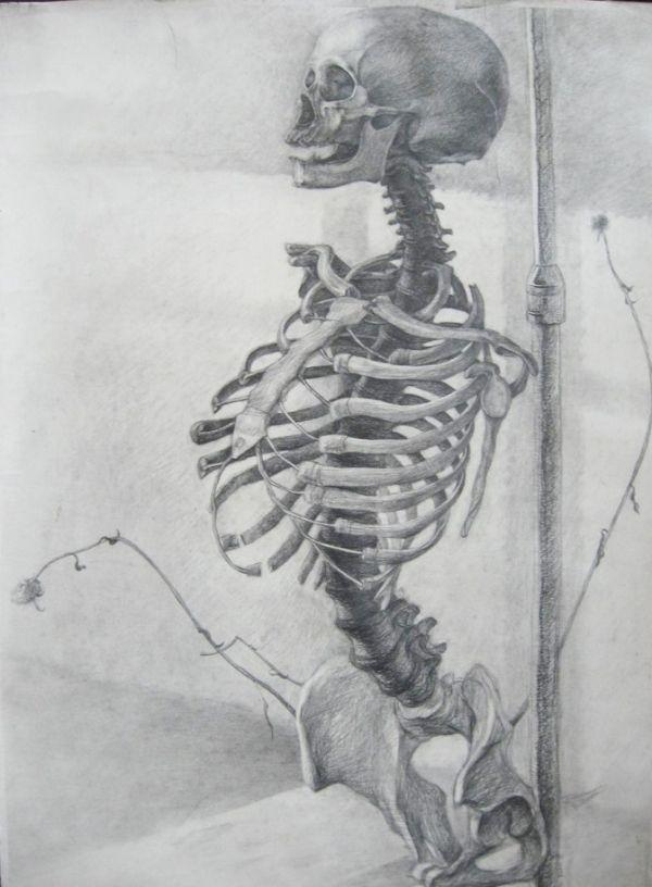 the-human-skeleton-1341452196_b (600×816) | sketch | pinterest, Skeleton