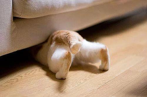 Kedileri seviyorum çünkü evimi seviyorum ve kediler de yavaş yavaş evimin gözle görünür bir ruhu oluyorlar. (John Cocteau)