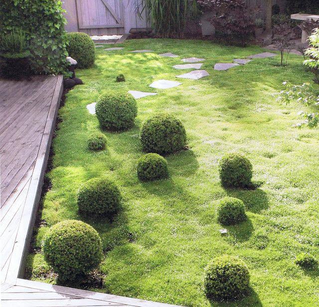 Istället för gräs, trampnarv,Sagina, subulata,en marktäckande perenn växt som snabbt täcker in ett område.